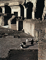 0176114 © Granger - Historical Picture ArchiveROME: COLOSSEUM.   Cats in the Colosseum in Rome. Photograph by Madeline Grimoldi, mid 20th century.