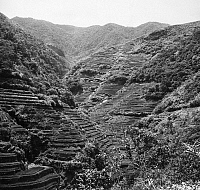 0095506 © Granger - Historical Picture ArchivePHILIPPINES: RICE FIELDS.  View of a small part of the rice terraces of Banawe on Luzon Island. The terraces have been under cultivation for some 3,000 years. Photograph, 1962