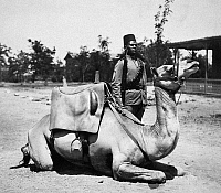 0115588 © Granger - Historical Picture ArchiveSUDAN: COLONIAL SOLDIER.   A native soldier of the British army in Sudan with his camel. Photograph, early 20th century.