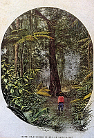 0044058 © Granger - Historical Picture ArchiveSAINT LUCIA: RAINFOREST.   A rainforest on the island of Saint Lucia. Postcard, French, c1900.