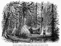 0042782 © Granger - Historical Picture ArchiveCANADA: FOREST.   Native American village in a Canadian forest. Wood engraving, 19th century.