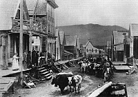 0174667 © Granger - Historical Picture ArchiveCANADA: BARKERVILLE.   Citizens of the frontier town of Barkerville, British Columbia, Canada, watching a cattle drive down Main Street. Photograph, c1865.