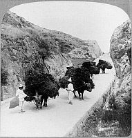 0118188 © Granger - Historical Picture ArchiveKOREA: FARMERS, c1904.   Farmers on their way to the market in Seoul, Korea, passing through the Peking Pass, the highway to Manchuria and China, with their pack animals. Stereograph, 1904.