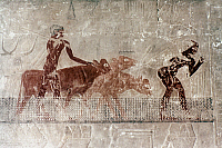 0021188 © Granger - Historical Picture ArchiveEGYPTIAN TOMB PAINTING.   Cattle fording a stream. Painting from the Mastaba of Ti, 5th Dynasty.