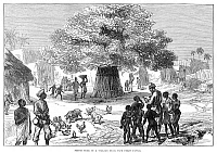 0265075 © Granger - Historical Picture ArchiveGHANA: CAPE COAST, 1874.   'Fetish Tree in a Village Near Cape Coast Castle,' in Ghana, during the third Anglo-Ashanti War. Engraving, English, 1874.