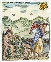 0060136 © Granger - Historical Picture ArchivePERU: HARVESTING POTATOES.   Native Peruvians harvesting potatoes. Drawing from 'El primer nueva cronica y buen gobierno [The first new chronicle and good government], 1583-1615, by Felipe Guaman de Ayala.