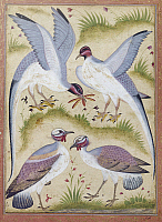 0119795 © Granger - Historical Picture ArchiveINDIA: PHEASANTS.   Miniature painting of a group of pheasants, from a natural history manuscript, Indian, late 16th century.