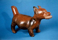 0168407 © Granger - Historical Picture ArchiveMEXICO: COLIMA DOG.   Clay figure of a dog holding a corn cob in its mouth. By the Pre-Columbian culture of Colima, Mexico, 8th-10th century A.D.