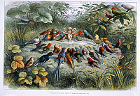 0507915 © Granger - Historical Picture ArchiveBRITISH LIBRARY.    In Fairy Land A series of pictures from the elf-world by Richard Doyle With a poem by W Allingham. An elf and birds. Full credit: British Library / Granger, NYC -- All rights reserved.