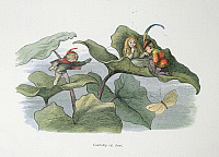 0523717 © Granger - Historical Picture ArchiveBRITISH LIBRARY.    In Fairy Land A series of pictures from the elf-world by Richard Doyle With a poem by W Allingham. Courtship cut short. Full credit: British Library / Granger, NYC -- All rights reserved.
