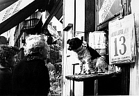 0560897 © Granger - Historical Picture ArchiveFRANCE.   Two women look at a dog that sits on the display of a lottery stand. Full credit: Gert Mähler / Süddeutsche Zeitung Photo / Granger, NYC -- All rights reserved.