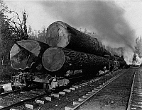 0595583 © Granger - Historical Picture ArchiveUNITED STATES OF AMERICA.   Huge tree trunks are ready for the transport on freight wagons. Full credit: Scherl / Süddeutsche Zeitung Photo / Granger, NYC -- All rights reserved.
