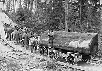 0595855 © Granger - Historical Picture ArchiveUNITED STATES OF AMERICA.   Woodcutters carry a fallen log with the help of a horse-drawn rail car. Full credit: Scherl / Süddeutsche Zeitung Photo / Granger, NYC -- All rights reserved.