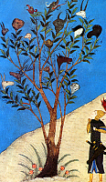0608523 © Granger - Historical Picture ArchiveIRAN.   Alexander the Great at the Talking Tree, miniature from a Timurid copy of Firdausi's Shahnameh, c. 1430. Full credit: Pictures from History / Granger, NYC -- All rights reserved.