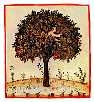 0609381 © Granger - Historical Picture ArchiveIRAQ / ITALY.   Sour Cherries (Ceresa Acetosa). Illustration from Ibn Butlan's Taqwim al-sihhah or 'Maintenance of Health' (Baghdad, 11th century) published in Italy as the Tacuinum Sanitatis in the 14th century. Full credit: Pictures from History / Granger, NYC -- All rights reserved.