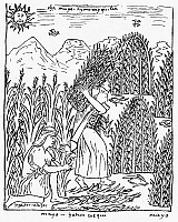 0118456 © Granger - Historical Picture ArchivePERU: HARVESTING MAIZE.   Native Peruvians harvesting maize. Drawing from 'El primer nueva cronica y buen gobierno [The first new chronicle and good government], 1583-1615, by Felipe Guaman de Ayala.