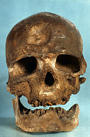 0021678 © Granger - Historical Picture ArchiveCRO-MAGNON SKULL.   Frontal view of skull of Cro-Magnon Man.