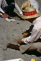 0167499 © Granger - Historical Picture ArchiveUTAH: MICROFOSSILS.   Fossil preparators working at a microfossil site at Dinosaur National Monument, near the border between northeastern Utah and northwestern Colorado. Photographed c1975.