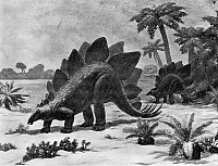 0167506 © Granger - Historical Picture ArchiveDINOSAUR: STEGOSAURUS.   A Stegosaurus of the Late Jurassic period. Mural by Charles R. Knight, 1926-1930, from the Field Museum of Natural History, Chicago, Illinois.