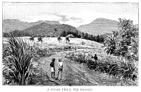 0353515 © Granger - Historical Picture ArchiveFIJI: SUGAR FIELD, 1885.   A sugar field in Fiji. Wood engraving, English, 1885.