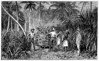 0353525 © Granger - Historical Picture ArchiveFIJI: SUGAR FIELD, 1885.   Workers loading up harvested sugar cane at a farm in Fiji. Wood engraving, English, 1885.