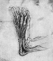 0018376 © Granger - Historical Picture ArchiveLEONARDO: BEAR ANATOMY.   The sole of the hind foot of a bear. Drawing by Leonardo da Vinci, c1490-1493.