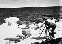 0100627 © Granger - Historical Picture ArchiveARCTIC: PHOTOGRAPHER.   A photographer shooting a polar bear cub in the Arctic, mid-20th century.