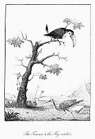 0098187 © Granger - Historical Picture ArchiveTOUCAN AND FLYCATCHER.   Line engraving, English, 1796, from the 'Narrative of an Expedition against the Revolted Negroes of Surinam' by J.G. Stedman.