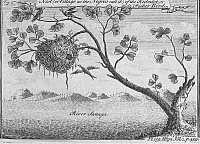 0100463 © Granger - Historical Picture ArchiveFISHER BIRD.   Nest of the fisher bird on the Sanaga River, Cameroon. Line engraving, 18th century.