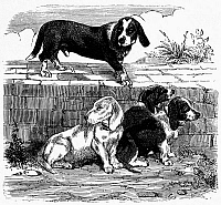 0133511 © Granger - Historical Picture ArchiveDOGS: TURNSPITS.   Four tunspit dogs. Line engraving, 19th century.