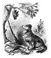 0268689 © Granger - Historical Picture ArchiveHUNTING DOG, 19th CENTURY.   A hunting dog, with a rifle and a dead bird. Engraving, 19th century.