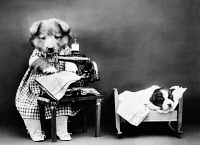 0371028 © Granger - Historical Picture ArchiveFREES: DOG, c1914.   'Making baby's clothes.' Photograph by Harry Whittier Frees, c1914.