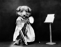 0371031 © Granger - Historical Picture ArchiveFREES: DOG, c1914.   'The fiddler.' Photograph by Harry Whittier Frees, c1914.