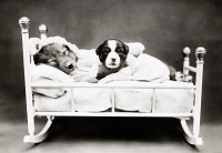 0371032 © Granger - Historical Picture ArchiveFREES: DOG, c1914.   'When bedtime comes.' Photograph by Harry Whittier Frees, c1914.
