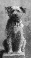 0371180 © Granger - Historical Picture ArchiveMILITARY DOG, 1902.   'Drummer,' a decorated dog with the Northumberland Fusiliers. Photograph, c1902.