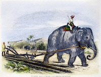0086780 © Granger - Historical Picture ArchiveELEPHANT PLOWING, 1847.   An elephant plowing a field on a sugar plantation in India. Wood engraving, 1847.