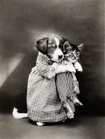 0353286 © Granger - Historical Picture ArchiveFREES: KITTENS, c1914.   'The nurse.' Photograph by Harry Whittier Frees, c1914.