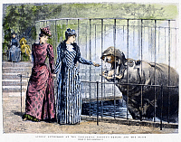 0091112 © Granger - Historical Picture ArchiveLONDON ZOO, 1891.   A woman feeding a hippopotamus at the London Zoo. Wood engraving, English, 1891, after Percy Macquoid.