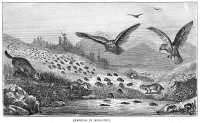 0013836 © Granger - Historical Picture ArchiveLEMMING MIGRATION.   Wood engraving, 19th century.
