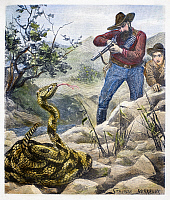 0087156 © Granger - Historical Picture ArchiveSHOOTING A RATTLESNAKE.   A hunter prepares to shoot a rattlesnake. Line engraving, English, late 19th century, after Stanley Berkeley.