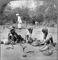 0113221 © Granger - Historical Picture ArchiveDELHI: SNAKE CHARMERS.  Snake charmers handling the hooded cobra, Delhi, India, stereograph c1903.