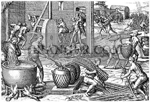 the importance of sugar cane industry in west indies in the 16th century This is the first of what i estimate to be a 6-7 part series on the african slave trade and the sugar industry in barbados i think that it is important to.