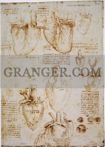 Image Of Leonardo Anatomy C1512 Pen And Ink Studies By Leonardo