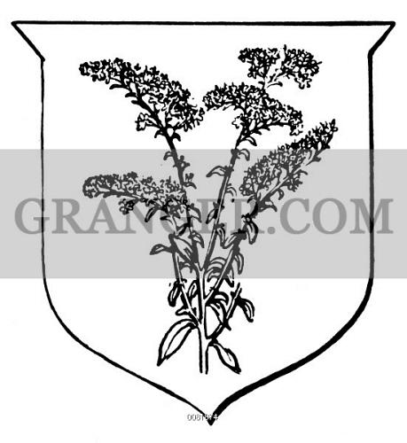 STATE FLOWER: GOLDENROD. Goldenrod, the state flower of Kentucky and Nebraska and the