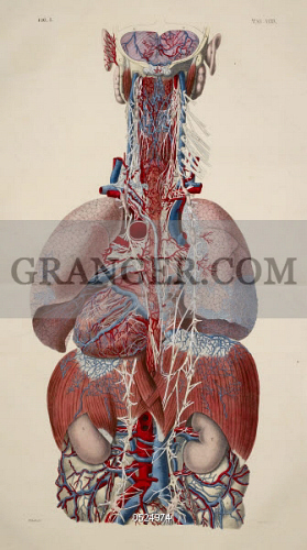 Human anatomy drawing organs path decorations pictures full path draw and label a diagram of the organs of speech luxury place of draw and label a diagram of the organs of speech new ber hmt organs the body diagram major ccuart Choice Image