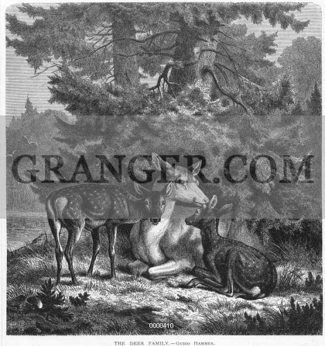 ZOOLOGY: DEER, 1872. 