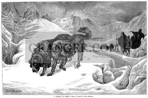 ST. BERNARD DOGS. 