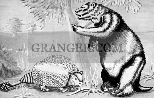 GLYPTODONT AND SLOTH. 