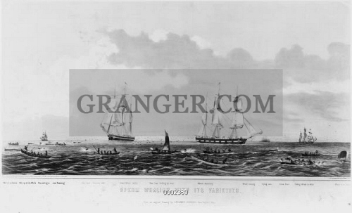 SPERM WHALING, 1871. 